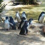 Featherdale Wildlife Park Foto