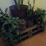 En la recepción, se monta un pequeño jardín.