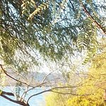 Tree and Lake Havasu from Campsite 4