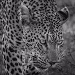 Londolozi Private Game Reserve 사진