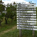 Sorell Fruit Farm Photo