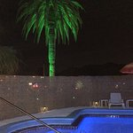 The palm tree lit up at the pool
