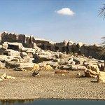 Photo of Arabian Wildlife Center