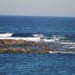 Surfing on Skaill Bay
