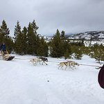 On-site dog sled rides.