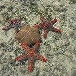 Watamu jumbo orange spiaggia