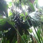 Le coco-fesse dans la vallée de Mai à voir