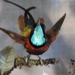 I like this hummingbird the most!