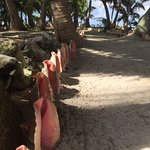 Conch lined paths--beautfully manicured island.