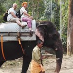 Elephant Junction - Day Tours Foto