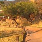 Kudu's on golf course