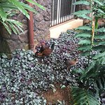 A beautiful resort with lovely rooms, and plenty of friendly chickens and cats!