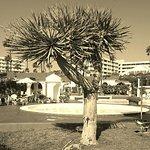 Parque Paraiso II Foto