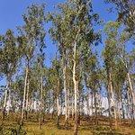 Periyar National Park Foto