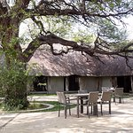 Dining under the camelthorn tree