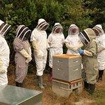 13 Bees Beekeeping Taster Sessions