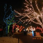 zoo lights 4