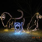 zoo lights 5