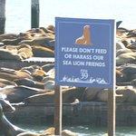 Ausflug zu Pier 39 nicht weit vom Hotel entfernt!