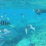 Anijima Seto Undersea Park