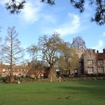 Westgate Gardens and its plane tree