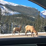 Drive to Banff