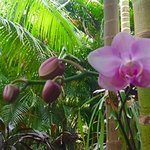 beautiful orchids in ikatan gardens