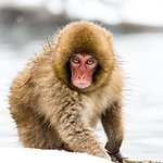 Juvenile monkey
