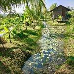 Shangri-Lanka Villa Foto