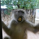 The baboons love to watch you...dont leave the door open!