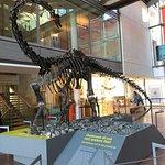 MuSe - Museo delle Scienze Foto