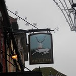 original white hart Foto