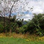 Photo de Coromandel Forest Park