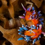 Nudibranch heaven