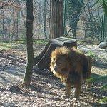 Photo de Giardino Zoologico di Pistoia
