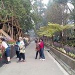 Botanical Garden in Gangtok