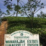 Tea Plantation and Bungalow located here