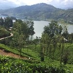 Tea Plantations overlooking Lake Castlereagh