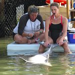 trainers checking health of dolphins