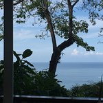 View from the restaurant. Iguana in the tree