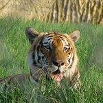 Los animales que hay, y se conservan mucho!