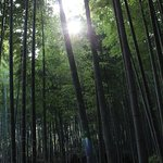 Bamboo Forest - Nearby highlight