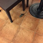 RATs in the dining area!