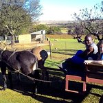 Join our fun donkey cart ride!
