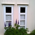 finestre e lupini