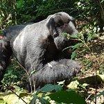 Photo de Bwindi Impenetrable National Park