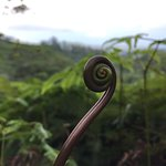 Maunawili Trail Foto