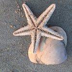 Starfish abound