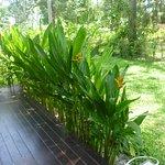Photo of Wapi Resort