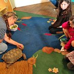 WildCare - Feeding time for the tortoise